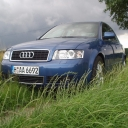 Audi On Grass.gif
