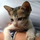 Cat On An Arm