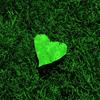 Green heart in grass