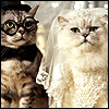 Groom Bride cats