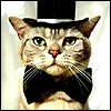 Groom cat