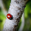 Ladybird on tree