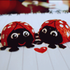 Ladybugs in love