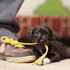 Little black pup