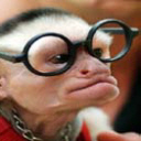 Monkey Wearing Specs