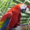 Parrot Standing