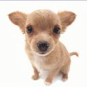 Puppy 1