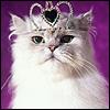 Tiara Cat