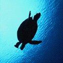 Turtle Sillouhette