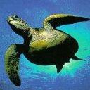 Turtle Underwater 2