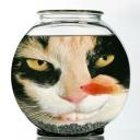 cat avatar 0110
