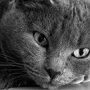 cat avatar 0393