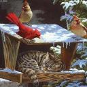 cat avatar 0654