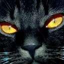 cat avatar 1664