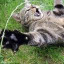 cat avatar 2276