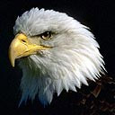 exotic animal avatar 0058