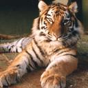 exotic animal avatar 0118
