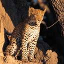 exotic animal avatar 1254