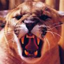 tigers lions avatars 2329
